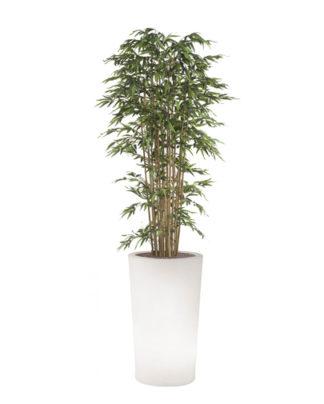 noleggio bambù e vaso x-pot light