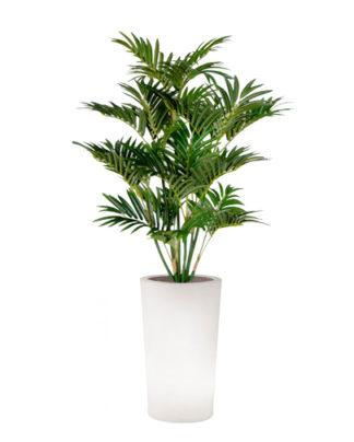 noleggio palma e vaso x-pot light