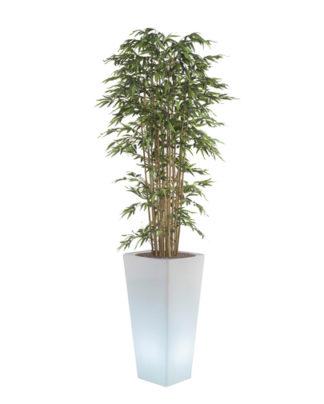 noleggio bambù e vaso y-pot light