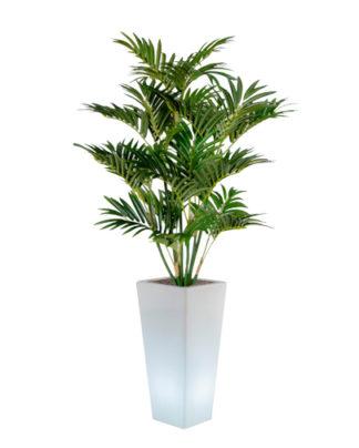 noleggio palma ecologica e vaso y-pot luminoso